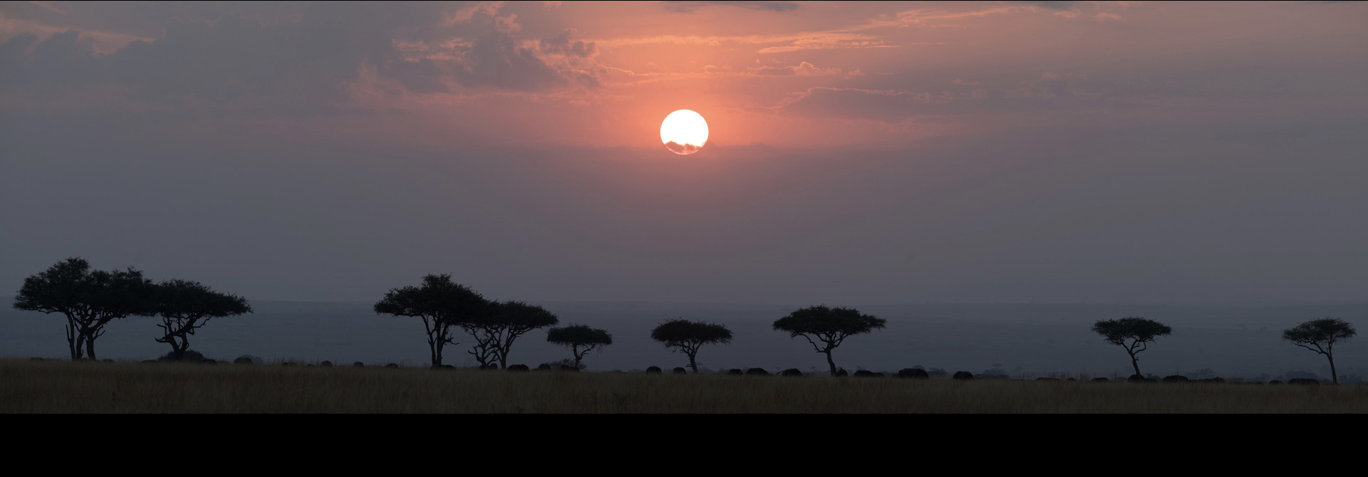 featured image of post: Safari Photography: How to Shoot from the 4×4