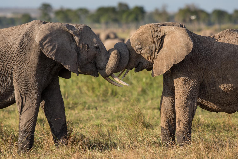 image taken in Kenya (Trip postponed)
