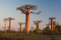 Landscape-Baobab-Madagascar-sunset-john-greengo