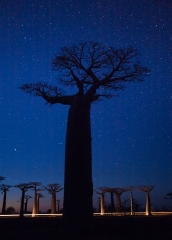 Landscape-Baobab-night-stars-light-trails-john-greengo