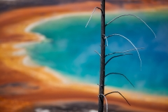 Landscape-Grand-Prismatic-Spring-foreground-burnt-tree-john-greengo