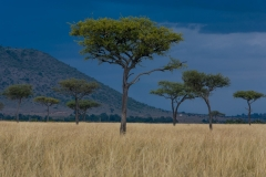 Landscape-Kenya-dark-background-light-foreground-trees- mountain-john-greengo