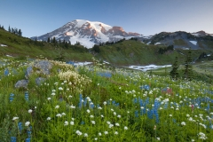 Landscape-Rainer-Tilt-Shift-flowers-mountain-summer-john-greengo
