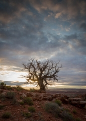 Landscape-Utah-tree-desert-sunset-john-greengo