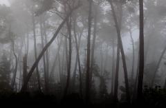 Landscape-fog-trees-black-white-monterey-john-greengo