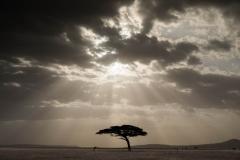 Landscape-serengeti-tanzania-john-greengo