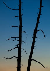 Landscape-silhoette-tree-natural-gradient-dead-tree-john.greengo