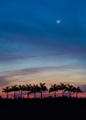 Landscape-sunset-everglades-florida-palm-tree-john-greengo