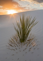 Landscape-white-sands-new-mexico-soaptree-yucca-john-greengo