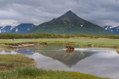 Wildlife-alaska-katmai-coast-grizzly-bear-in-pond-reflection-mountain-john-greengo