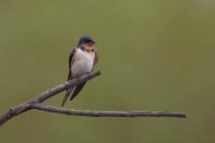 Wildlife-small-bird-on-branch-john-greengo
